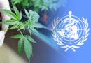 OMS muda classificação de ativos da cannabis após 60 anos