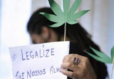 ANVISA: Apenas 1220 prescritores indicaram canabidiol e THC para pacientes no Brasil