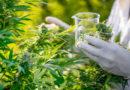 ABICANN: Indústria da Cannabis lança entidade que estimula negócios no Brasil