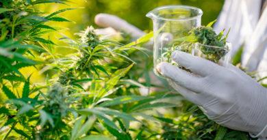 Indústria da Cannabis pode gerar 300 mil empregos e movimentar U$ 350 bi no Brasil em 10 anos