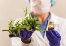 UNIFESP: curso gratuito sobre Cannabis Medicinal tem inscrições prorrogadas até 8 de março, para segunda turma