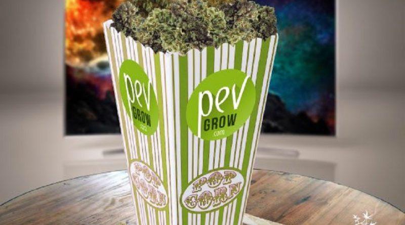 Festival Internacional de Cinema de Cannabis recebe inscrições até 30 de abril