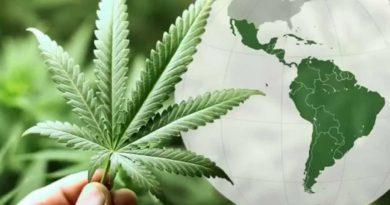 ABICANN: Brasil se úne à Rede Americana de Associações de Cannabis